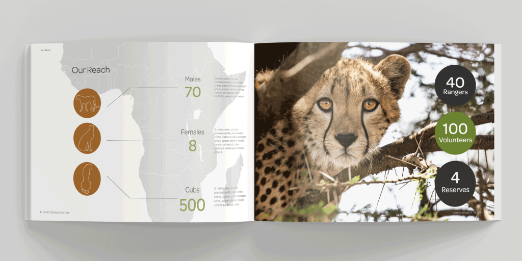 Example brochure pages with cheetah
